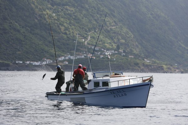 ICCAT – Prolongamento do regime de exceção da pesca do atum bonito no Atlântico
