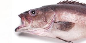 Conhecer o pescado de Portugal (1): Cherne