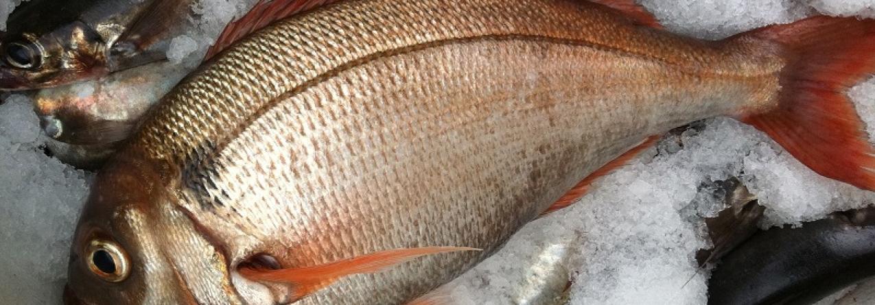 Pesca de goraz e de peixe-espada preto reduzida nos próximos dois anos