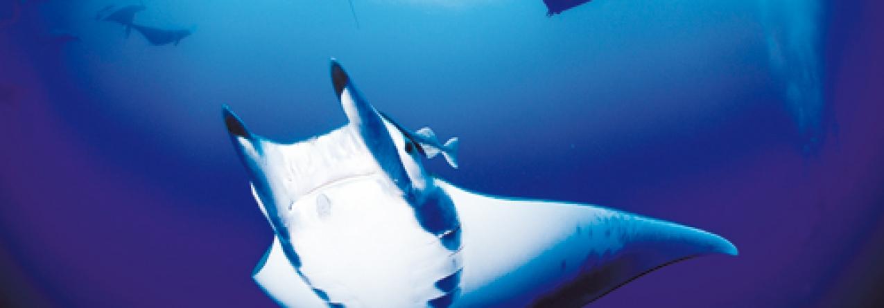 """Foto subaquática obtida no mar de Santa Maria, acaba de ser premiada com a sua publicação na famosa revista """"BBC Wildlife Magazine"""""""