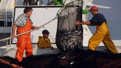"""""""FishTour"""", uma rota da sardinha para turistas"""