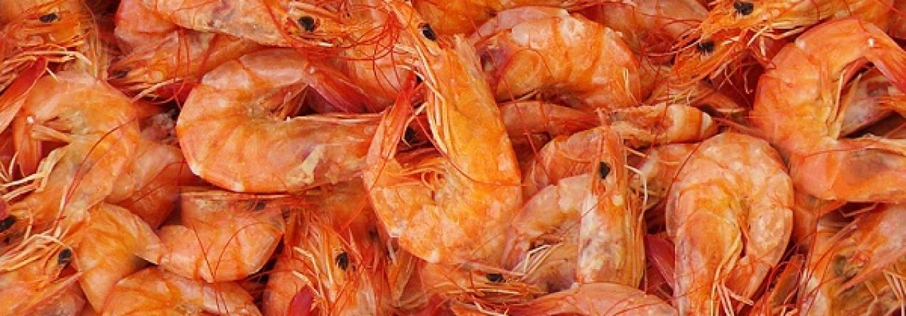 Afinal, camarão é ou não saudável?