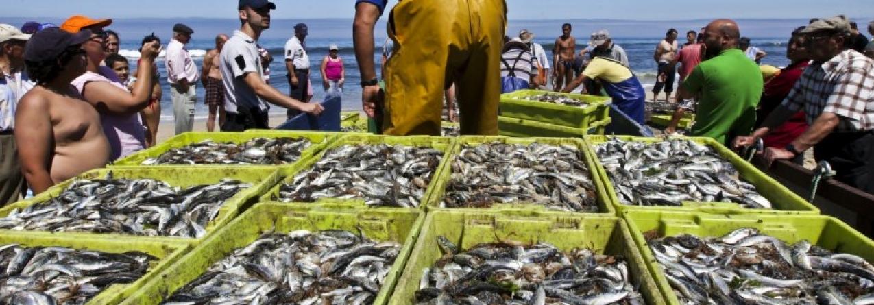 Pescadores de Setúbal querem manter quota da sardinha e desvalorizam aumento do carapau