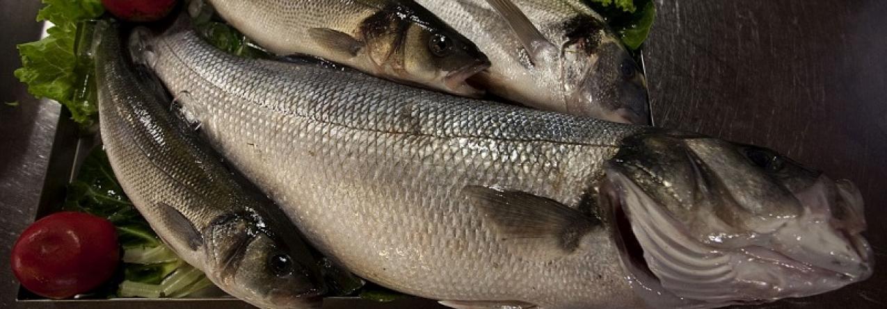 Crianças devem consumir mais peixe no início do ano lectivo para reforço das defesas