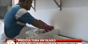Aquacultura: Estação de Piscicultura de Olhão testa novas espécies de peixe (video)