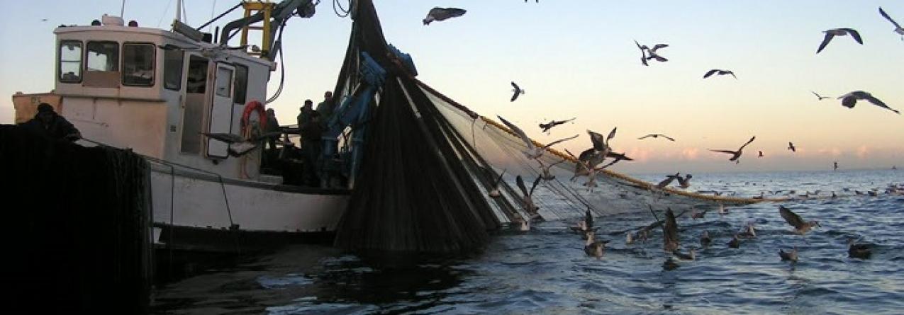 Cientistas estudam sardinha no mar para definir quotas