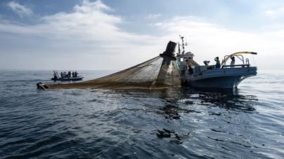 Ministra da Agricultura desafia empresas a investirem na produção de atum em aquacultura