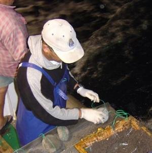 Europa chega a acordo sobre proibição da rejeição de pescado no mar