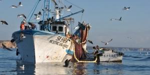 Governo já pagou 3,6 milhões de euros para compensar proibição de pesca da sardinha