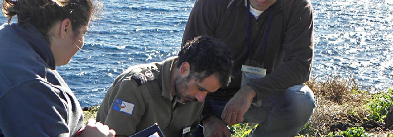 Parque Natural monitoriza 154 ninhos de paínho-da-madeira na Graciosa
