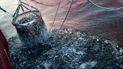 Governo recomenda aos pescadores que troquem sardinha por outro peixe