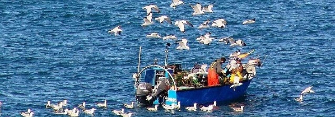 Directiva europeia ameaça pesca no norte de Portugal
