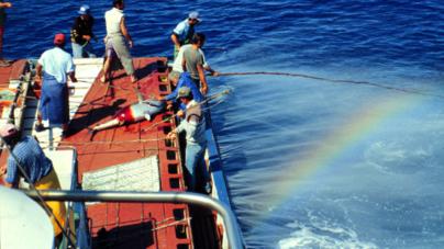 POPA recruta Observadores de Pescas