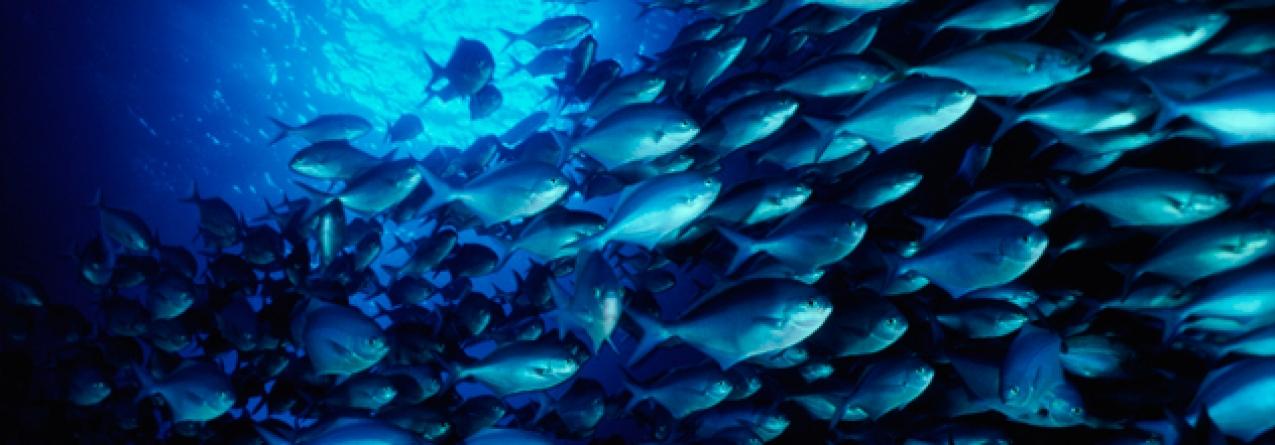 ONU prevê futuro negro para animais aquáticos devido às alterações climatáticas