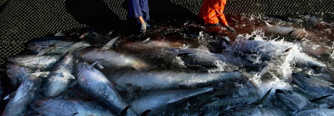 Governo surpreendido com relatório que envolve navios portugueses em pesca ilegal
