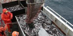 Portugal foi um dos seis países com pesca ilegal identificado em relatório norte-americano