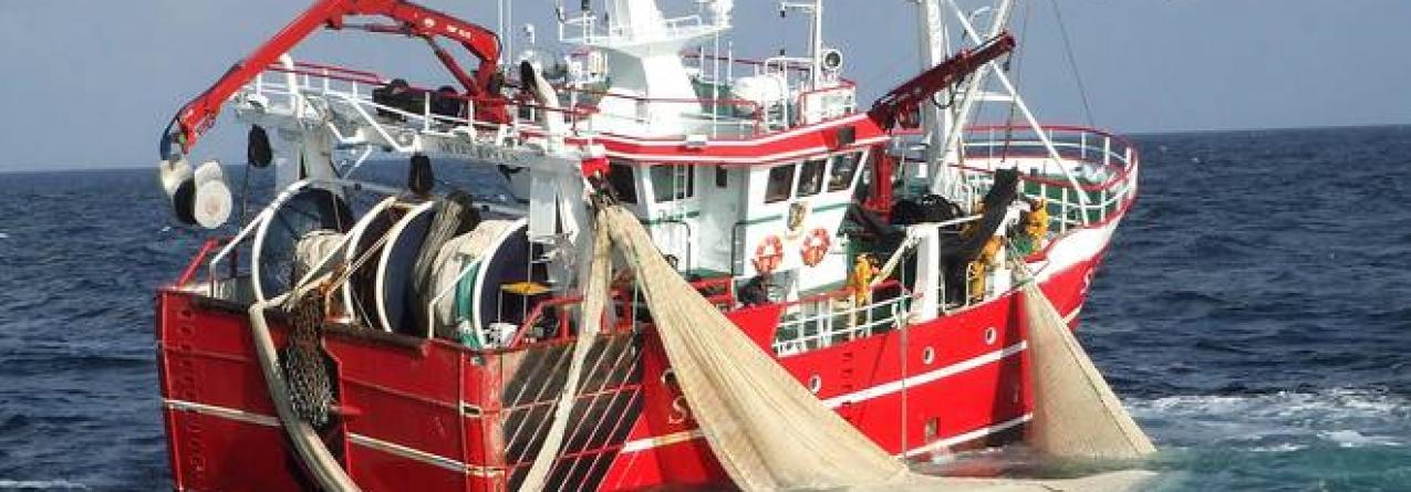 UE impõe restrições à pesca do robalo
