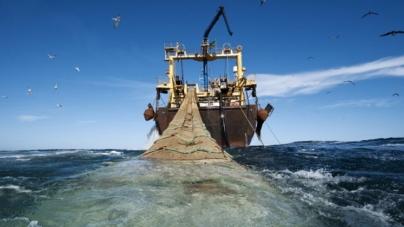 Redistribuir quotas de pesca pode gerar 824 milhões