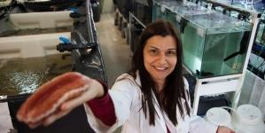 Escola Superior de Turismo e Tecnologia do Mar, de Peniche vai criar minhocas para a pesca