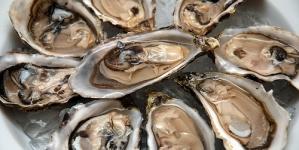Elevados impostos e burocracia travam expansão da produção de ostras no Algarve