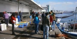 A Cooperativa 'Porto de Abrigo' quer revogação da portaria que liberaliza preço do peixe
