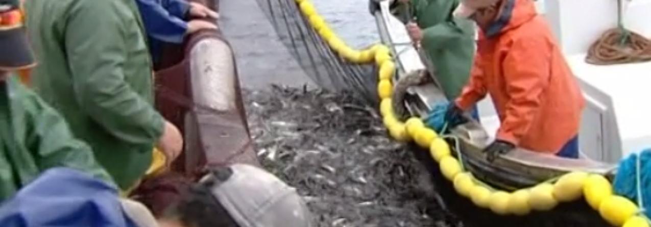 Barcos da sardinha voltam ao mar (video)