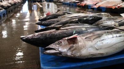 Valor do pescado nas lotas dos Açores diminui 6% em cinco anos