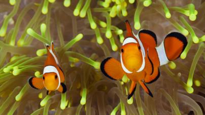 Contra a pesca com cianeto – Universidade de Aveiro