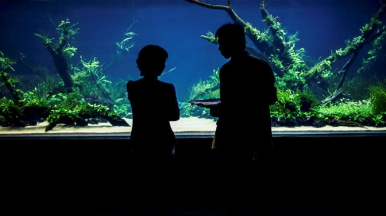 """Oceanário de Lisboa apresenta """"Florestas Submersas"""" by Takashi Amano. A maior e mais deslumbrante """"nature aquarium"""" do mundo."""