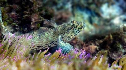 Descobertas 60 espécies marinhas na Arrábida