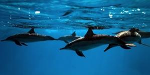 Associação mundial de jardins zoológicos e aquários expulsa Japão por caça ao golfinho