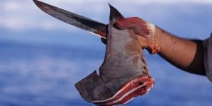 Barco português apreendido com 59 toneladas de tubarão