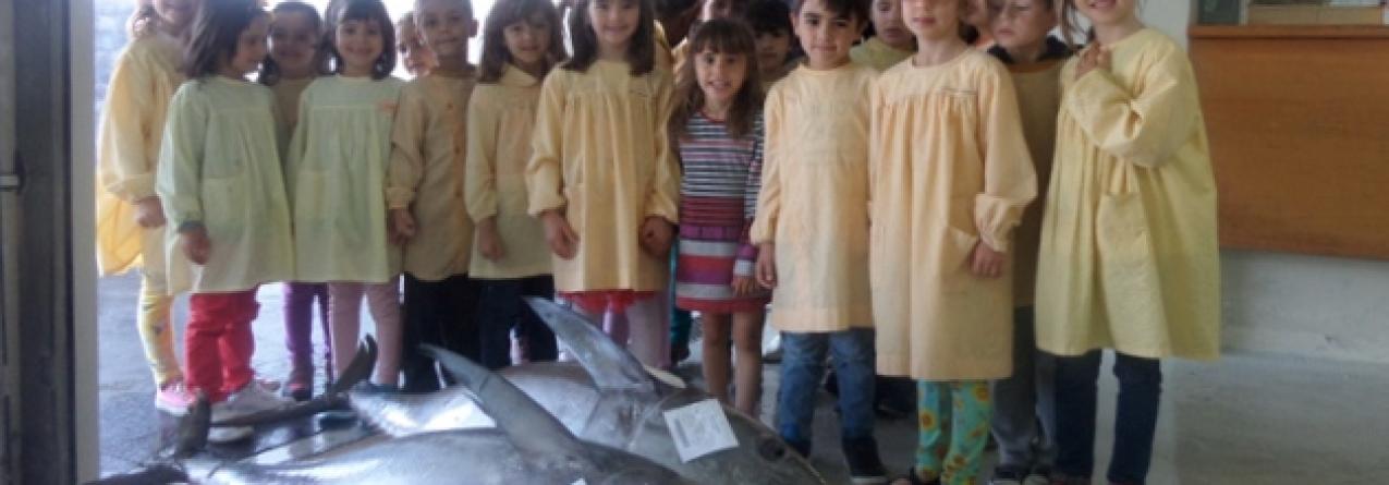 """Ponta Delgada // Projeto """"A Escola vai à Pesca"""" sensibiliza os mais novos para o consumo de pescado"""