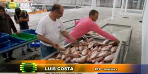 Associação de Pescadores Graciosenses quer exportar peixe-seco (vídeo)