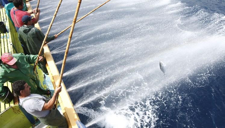 Frota atuneira açoriana pescou até Maio menos 70% do atum que pescara em igual período do ano passado