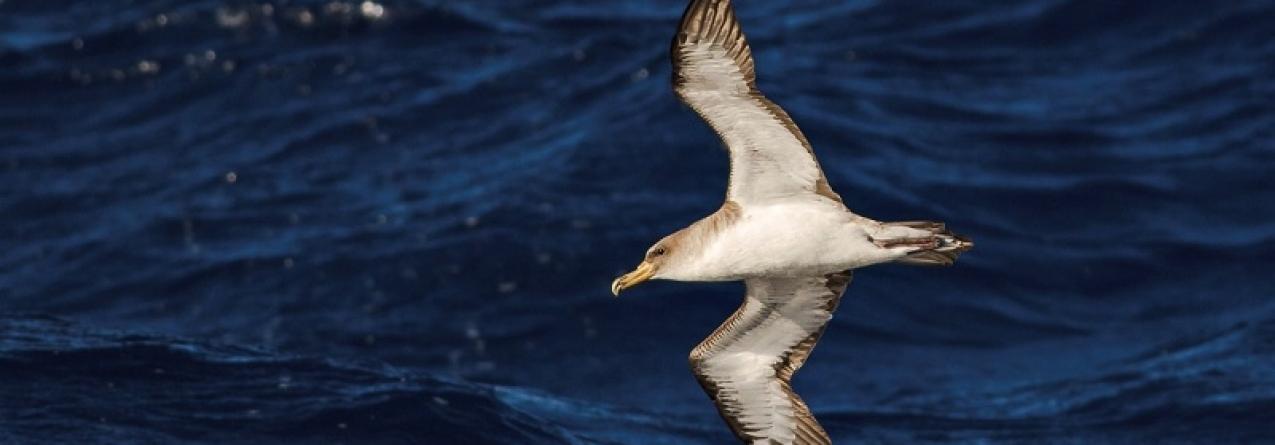 Açores // Quase todos continuam à espera do atum…