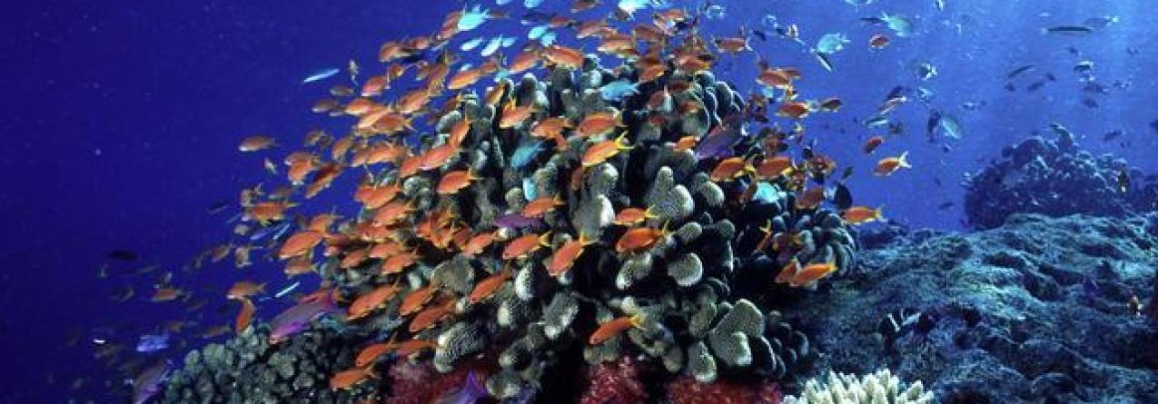 WWF // Proteção dos oceanos pode dar impulso à economia de 800 mil milhões de euros