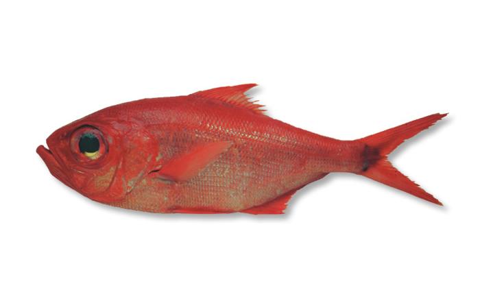 Aviso de 80% de utilização da quota e fecho de pesca dirigida aos imperadores
