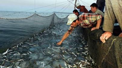 TAC e quotas // Gestão das unidades populacionais de peixes