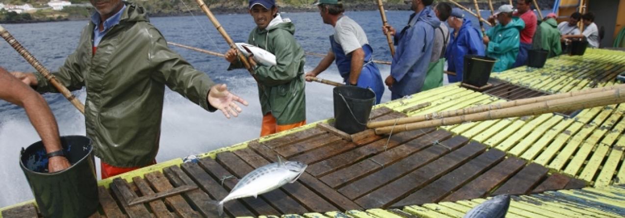 Governo dos Açores regulamenta a prática de pesca 'em mancha'