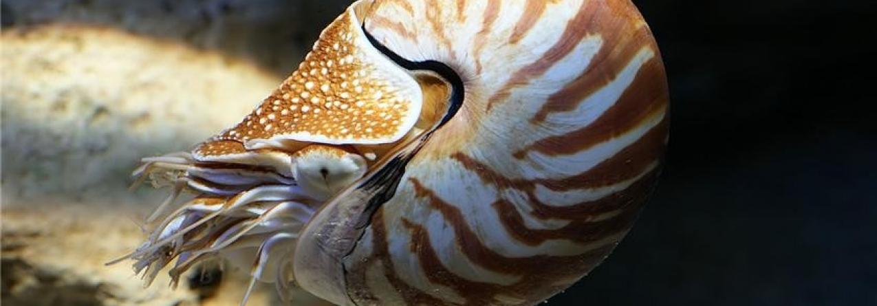 A espécie marinha mais rara dos oceanos voltou a ser avistada