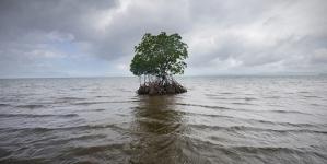 Nível do mar subiu em média quase 8 centímetros desde 1992 (vídeo)