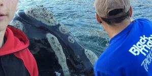 """Baleia """"pediu"""" a pescadores que a libertassem do plástico (vídeo)"""
