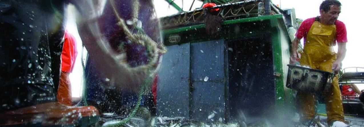 Parecer científico sugere uma quase interdição de pesca da sardinha