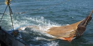 Estudo // União Europeia deve proibir a pesca de arrasto de fundo para além dos 600 metros de profundidade