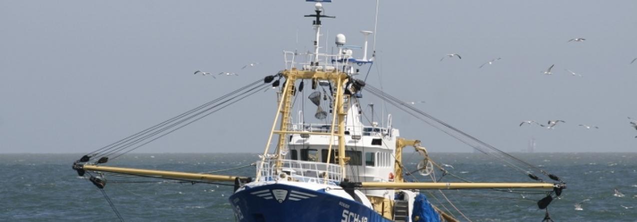 Pesca de arrasto abaixo dos 600 metros pode destruir ecossistema marinho