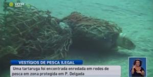 Vestígios de pesca ilegal em zona protegida de São Miguel