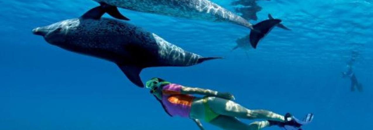 """Serge Viallelle do Espaço Talassa denuncia """"irresponsabilidade"""" de empresas na natação com golfinhos"""