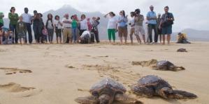 Cooperação interdepartamental do Governo dos Açores lidera projeto europeu sobre biodiversidade marinha