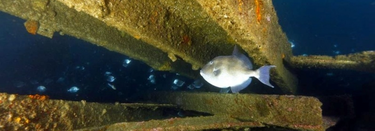 Açores vão ter uma rota de parques arqueológicos onde ocorreram naufrágios